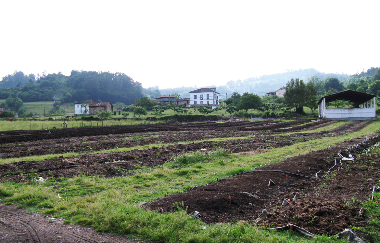 Certificación de Insumos para agricultura ecológica